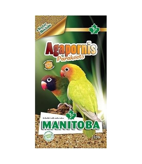 Manitoba, Agapornis Parakeets