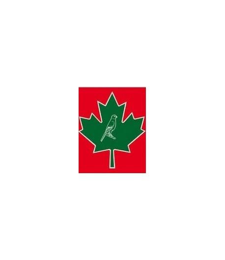 Manitoba, Canarini T1 senza biscotto